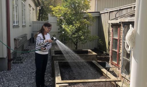 Elisabeth vattnar i en av trädgårdens odlingar.
