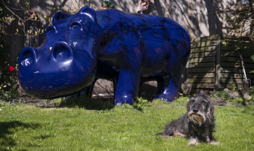 Taxen Bertil framför den stora blå flodhästen i trädgården.