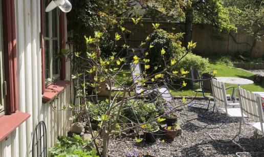 Uteplats med utemöbler utanför stugan i trädgården.