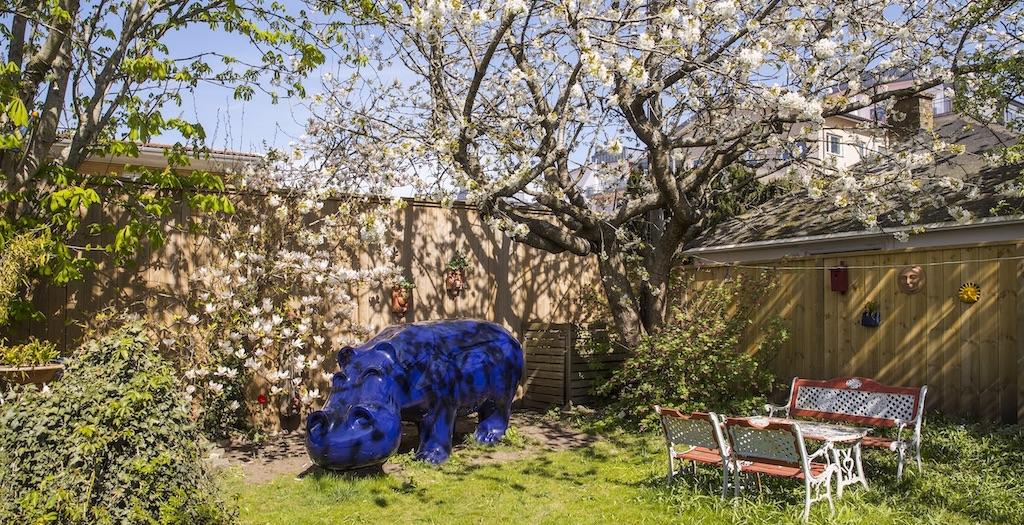 En stor blå flodhäst under ett blommande magnoliaträd i trädgården på Flodhästens Bed & Breakfast.